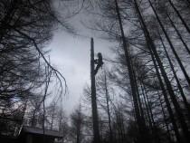 施工中  ツリークライミングによる幹の伐採