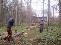 施工中  特殊伐採した幹の吊り降ろし