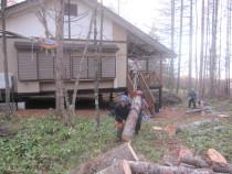 施工中  特殊伐採した幹の吊り降ろし運搬