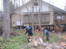 施工中  特殊伐採した幹の運搬